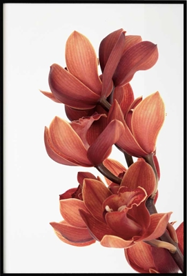 Poster & Gallery prints Orchid Flower, Poster
