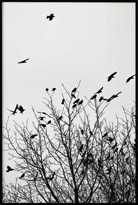 Birds in a Tree, Poster