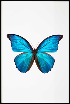 Poster & Gallery prints Blue Butterfly, Poster