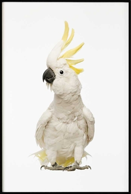 Cockatoo, Poster