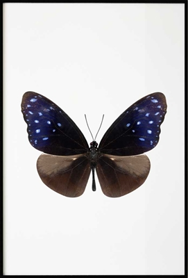 Poster & Gallery prints Dark Butterfly, Poster