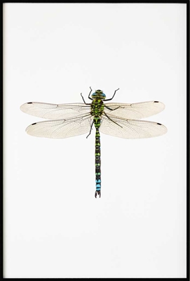 Poster & Gallery prints Dragonfly, Poster