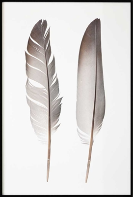 Poster & Gallery prints Feathers, Poster