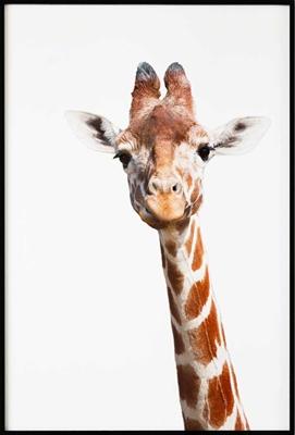 Poster & Gallery prints Insecten en dieren Giraffe, Poster