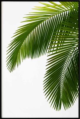 Poster & Gallery prints Palmboom takken, Poster