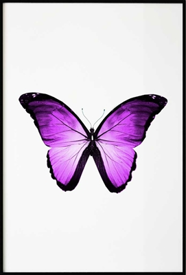 Poster & Gallery prints Pink Butterfly, Poster