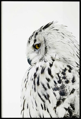 Poster & Gallery prints Snow Owl, Poster