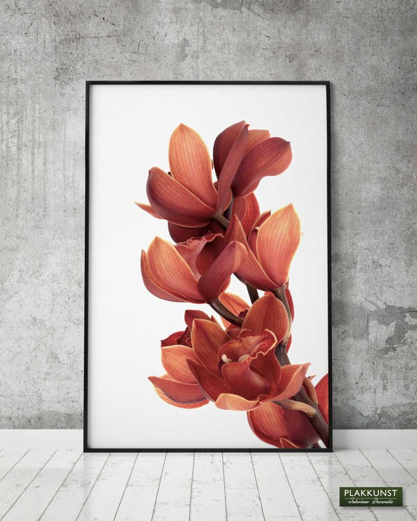 Orchid Flower, Poster