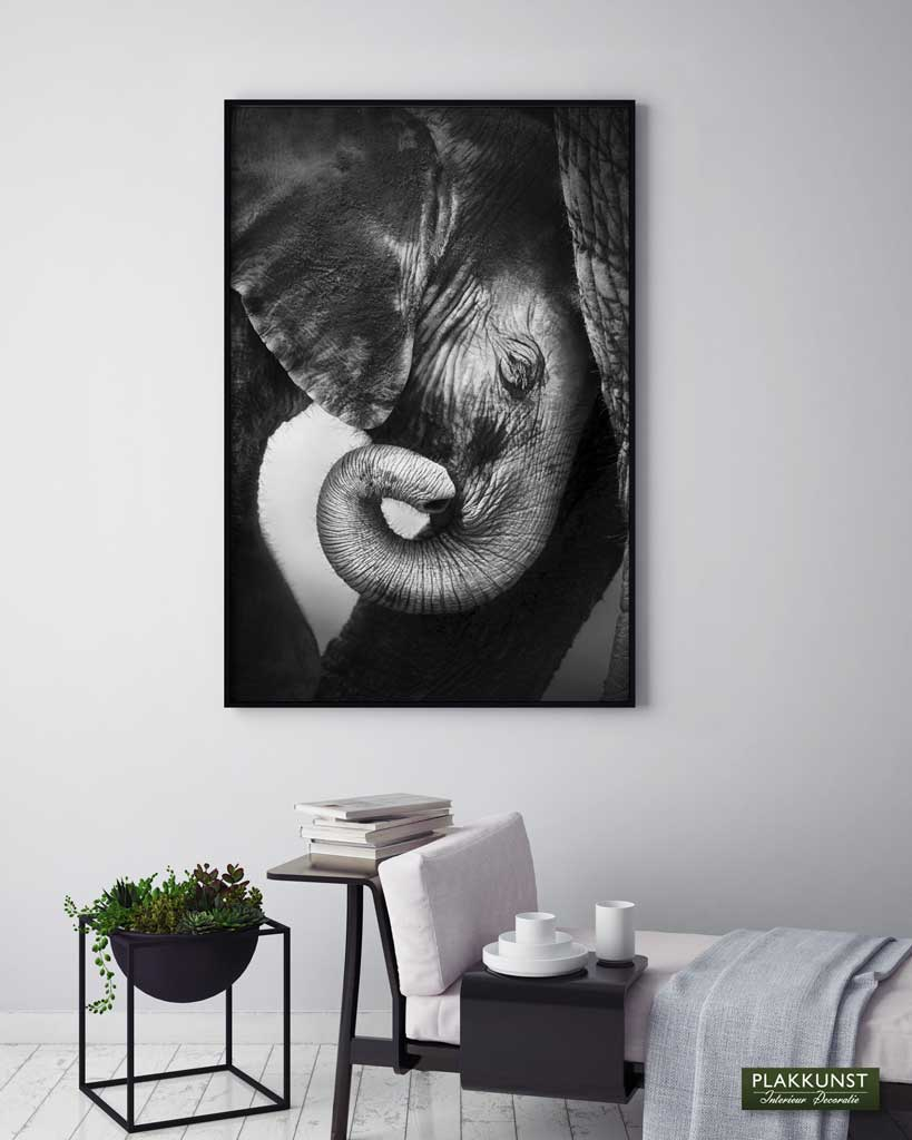 Baby Elephant, Poster