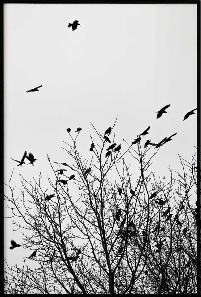 poster birds in a tree
