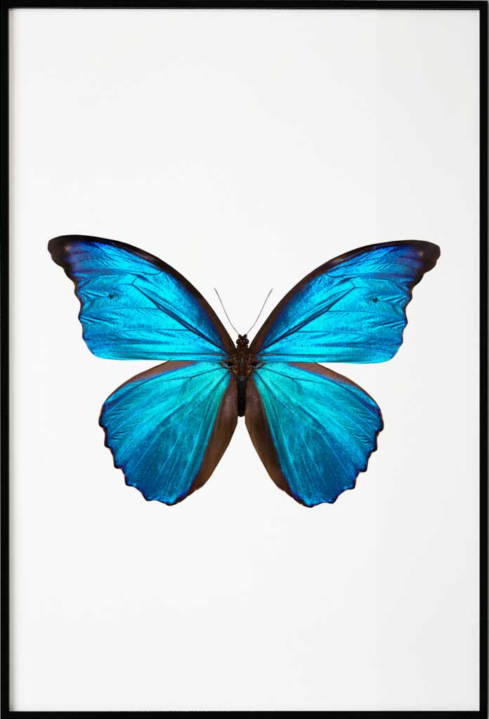 Blue Butterfly, Poster