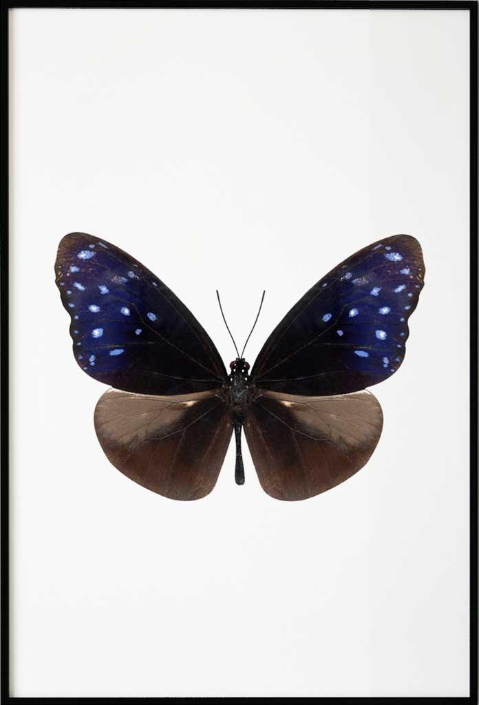 Dark Butterfly, Poster