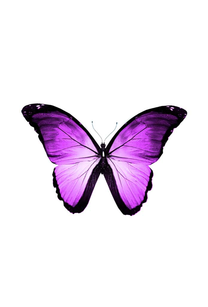 Pink Butterfly, Poster