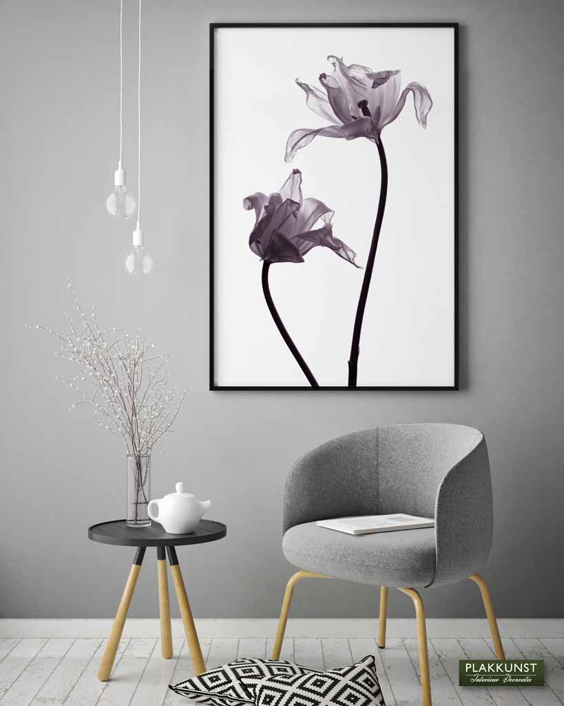 Tulip Purple, Poster